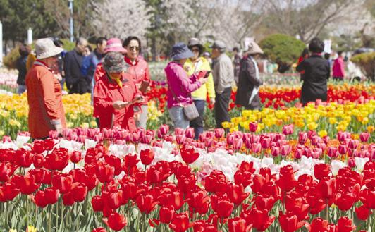 태안의 봄, 꽃으로 물들다