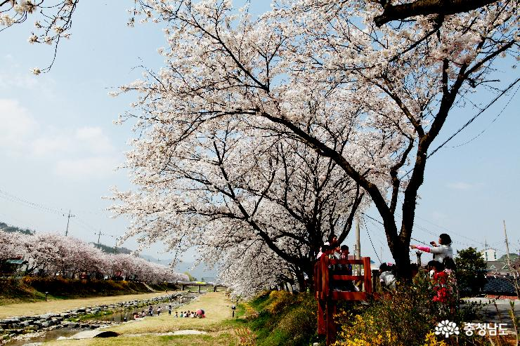 비단고을 금산, 봄꽃으로 물들다!