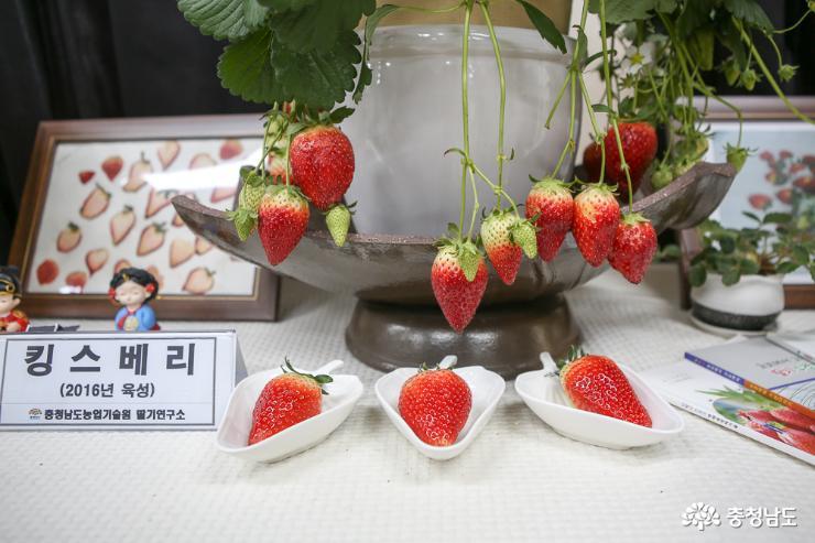 입안 가득 달콤한 향과 새콤달콤한 맛 딸기 6