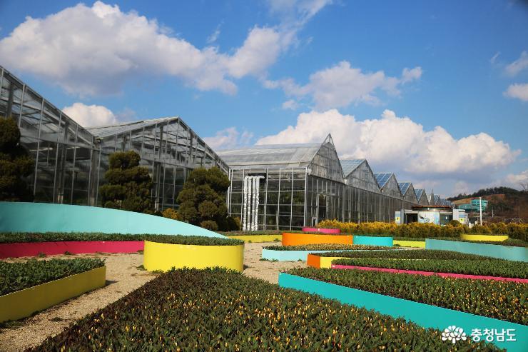 형형색색 튤립 만발한 아산 세계꽃식물원