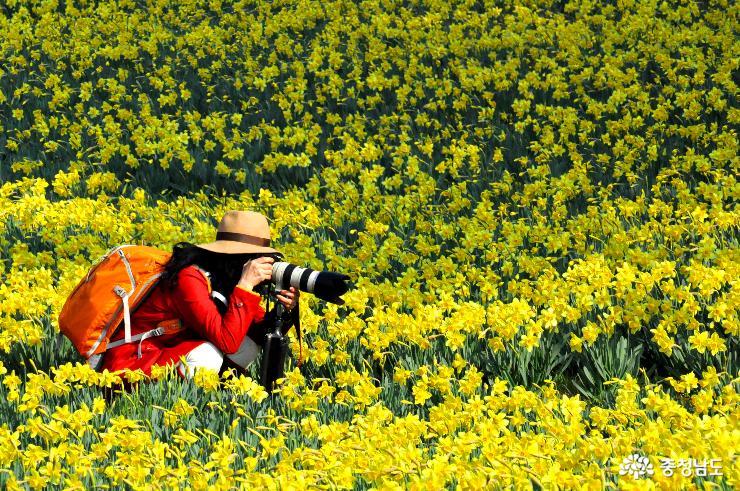 유기방가옥에 피어나는 노란 봄
