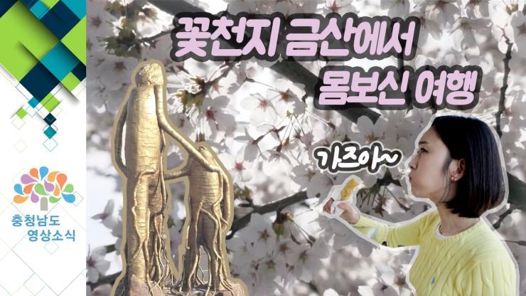 [VCR]꽃천지 금산에서 몸보신 여행