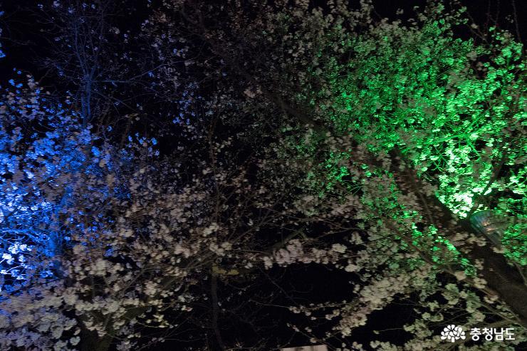 공주의 숨어있는 벚꽃 명소