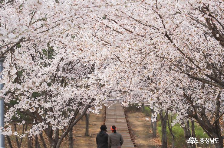 아산 지산공원에서 만난 봄꽃