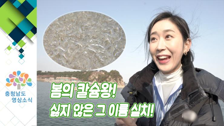 [VCR]봄의 칼슘왕! 실지 않은 그 이름 실치! (feat.당진 실치 축제)