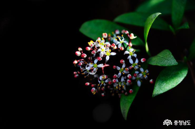 태안 천리포수목원에 봄꽃이 활짝 6