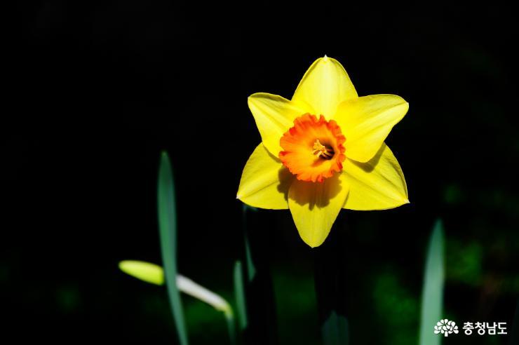 태안 천리포수목원에 봄꽃이 활짝 7