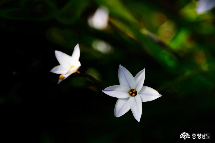 태안 천리포수목원에 봄꽃이 활짝 8
