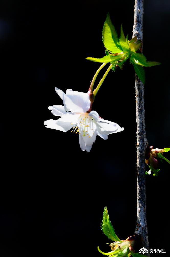 태안 천리포수목원에 봄꽃이 활짝 9