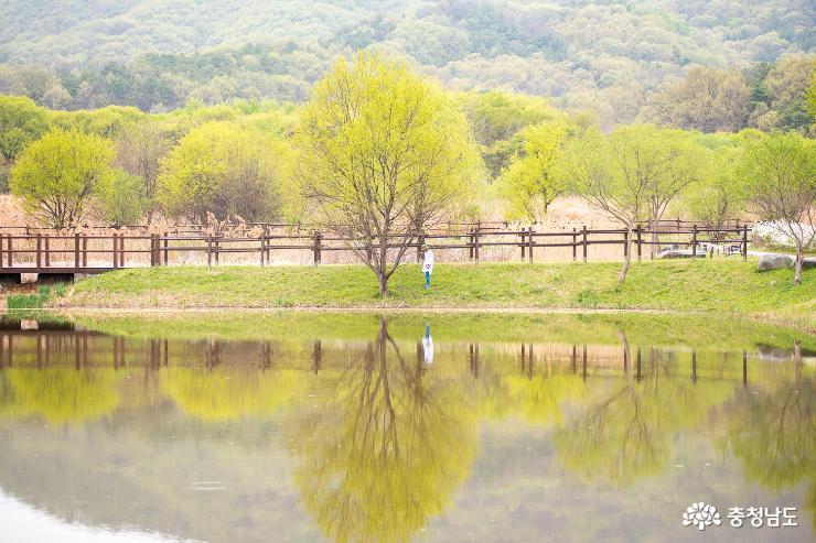 독립기념관 서곡야영장의 봄 풍경