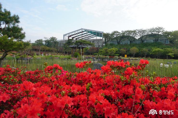 알록달록 봄꽃으로 물든 논산시민공원 1