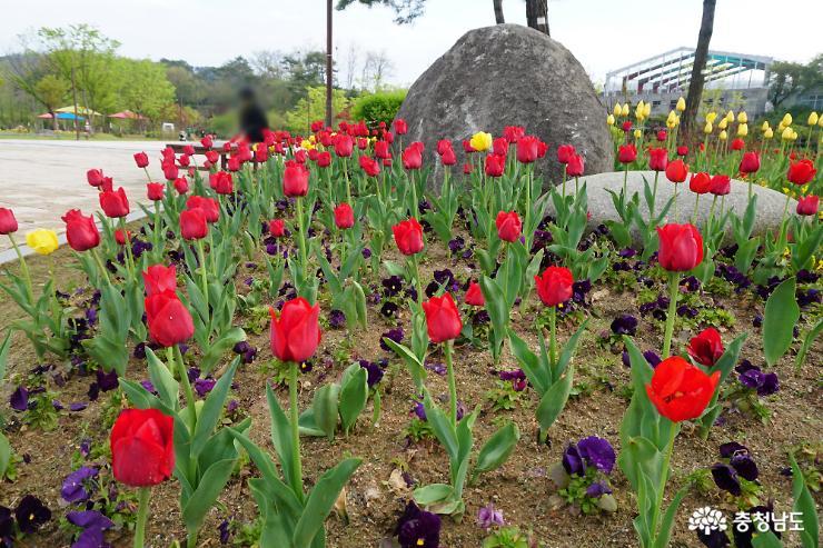 알록달록 봄꽃으로 물든 논산시민공원 4