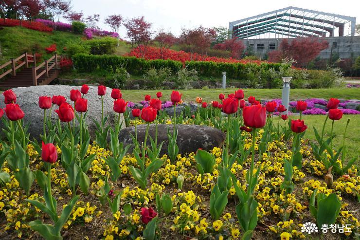 알록달록 봄꽃으로 물든 논산시민공원 7
