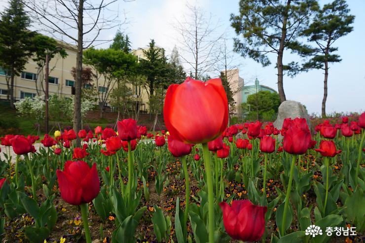 알록달록 봄꽃으로 물든 논산시민공원 10