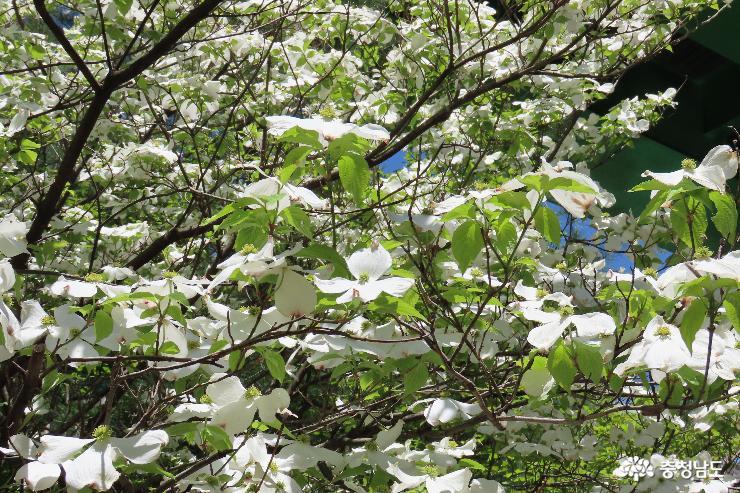 예산 관모산 5월 봄꽃 나들이