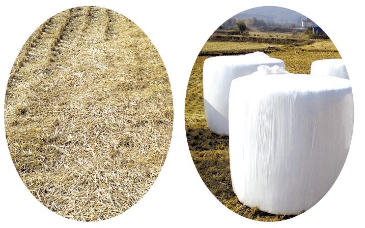 충남형 농업직불제, 2019 '농업환경실천사업'