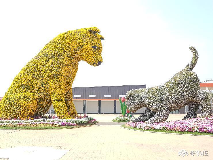 태안의 코리아플라워파크, 꽃천지 세상!!