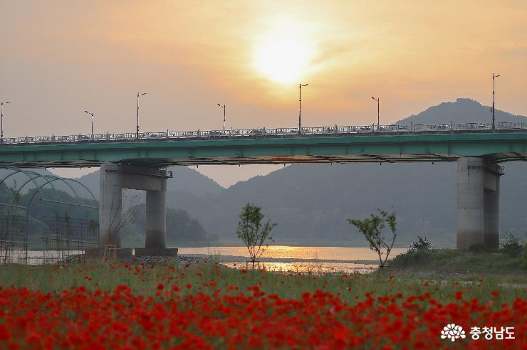 '노을맛집' 미르섬에서 양귀비꽃을 사진
