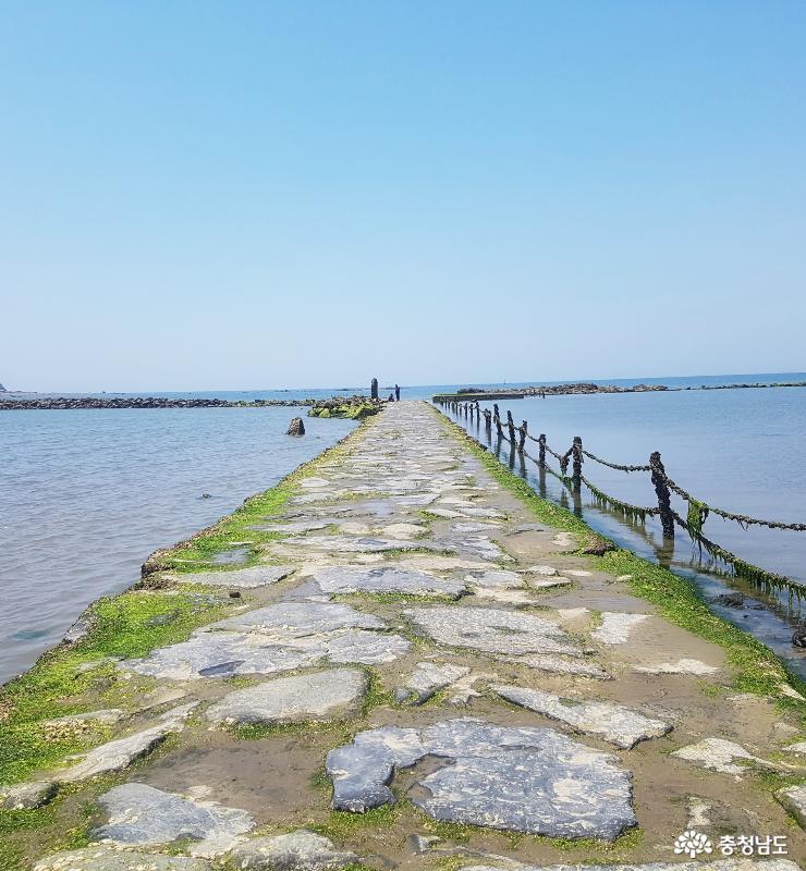 여름 피서는 무창포해수욕장 5