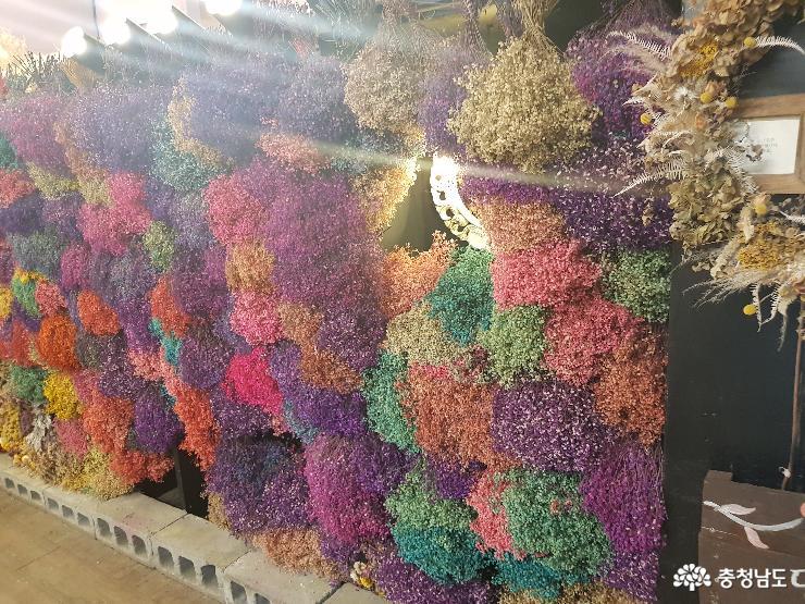 알록달록 오색찬란한 안개꽃이 있는 포토존