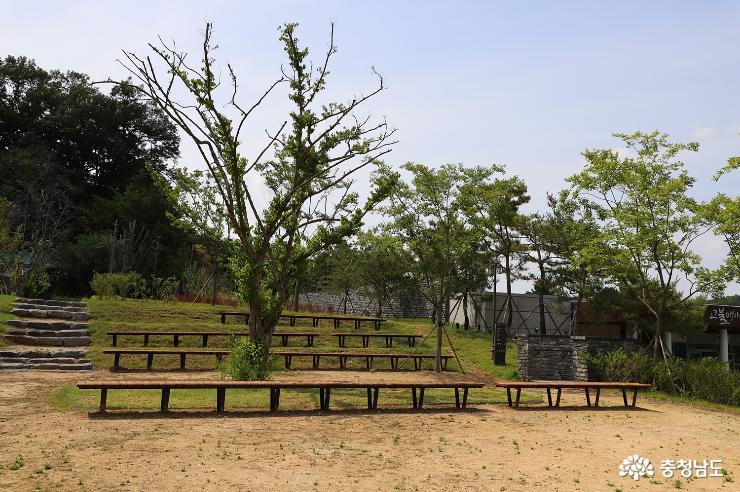 초여름 아산 맹씨행단  풍경 사진