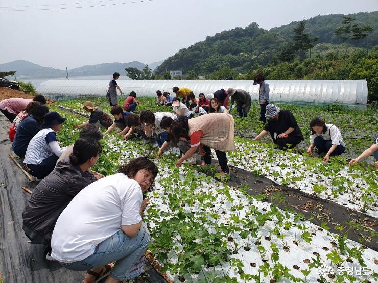 우리 농업 우리 농산물, 우리가 소비하자! 2