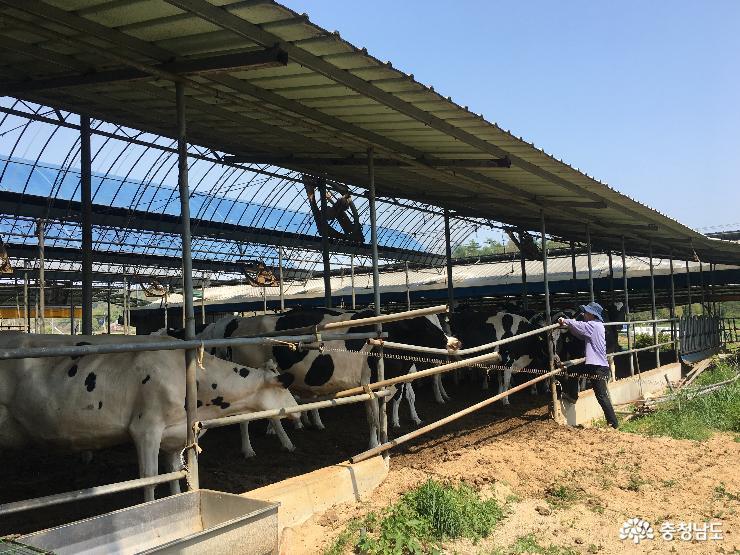 소 풀 뜯어 먹는 소리가 들리는 유기농 목장을 찾아서 2