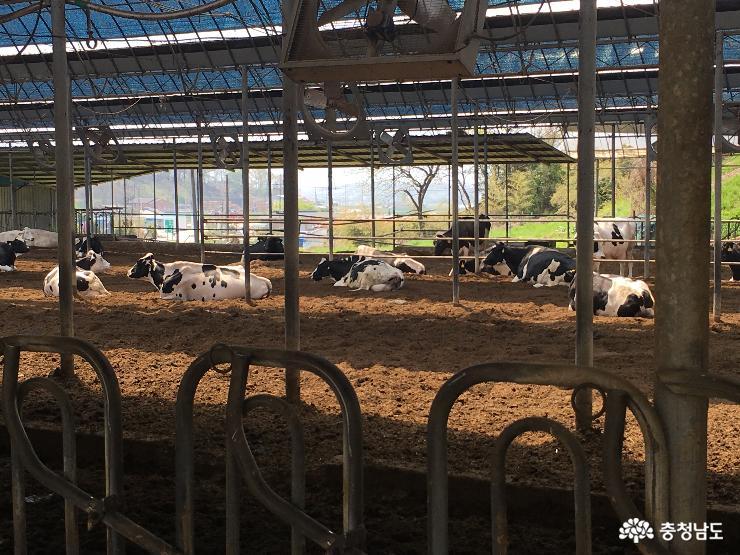 소 풀 뜯어 먹는 소리가 들리는 유기농 목장을 찾아서 5