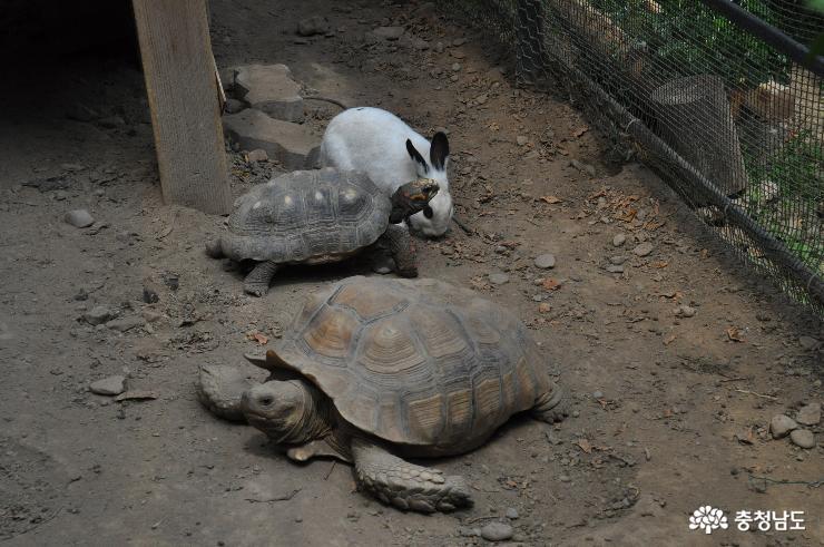 토끼와 거북