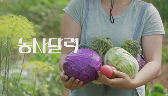시골살이n년차의 농사달력-소서, 콩밭매기!