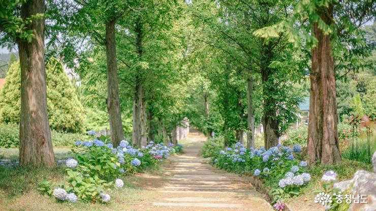 유럽 정원에 온 기분, 수국축제 즐기러 '태안 팜카밀레'로 떠나요 사진
