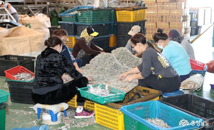 태안군, '외국인 계절근로자 프로그램' 일손부족 해소한다!