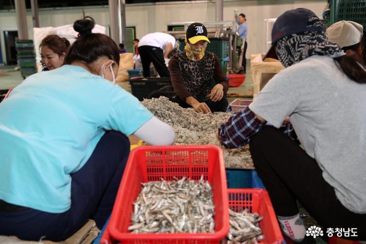 태안군, '외국인 계절근로자 프로그램' 일손부족 해소한다! 2