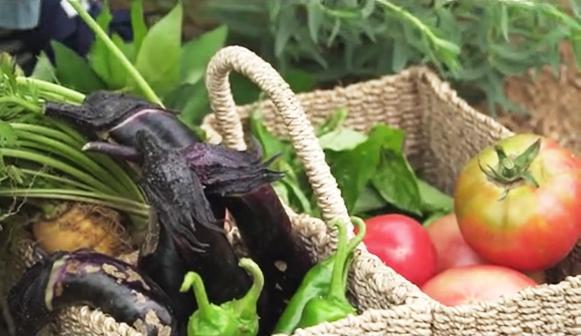 시골살이n년차의 농사달력-대서, 열매채소를 수확해요!