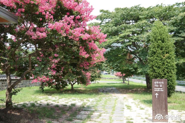 성주사지 배롱나무
