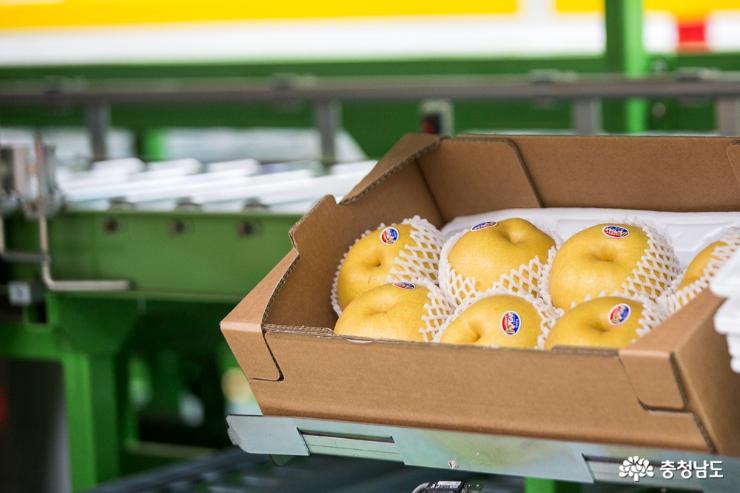 충남의 우수한 농·식품들 세계 각국으로 수출 2