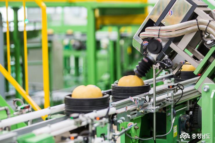 충남의 우수한 농·식품들 세계 각국으로 수출 4