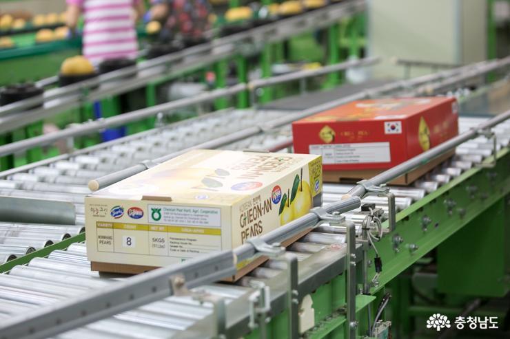 충남의 우수한 농·식품들 세계 각국으로 수출 5
