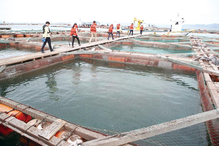지난 11일 고수온 특보가 발효된 천수만 양식장 점검에 나선 모습