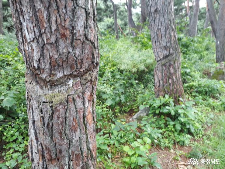 천년의 숲길을 따라가 본  봉곡사 4