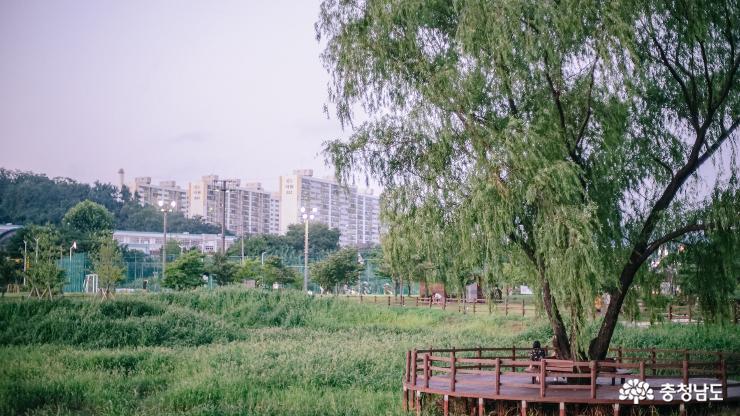 신나는 음악과 시원한 분수쇼가 있는 '천안 청수호수공원' 사진