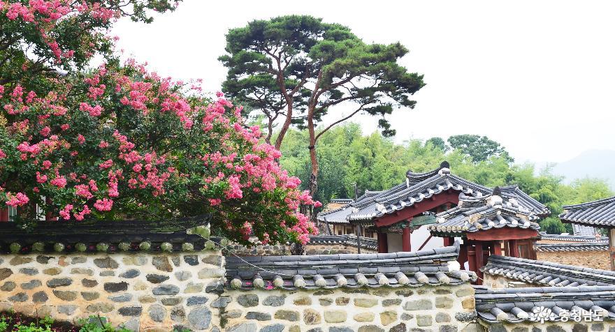 배롱나무가 아름다운 세계문화유산 돈암서원