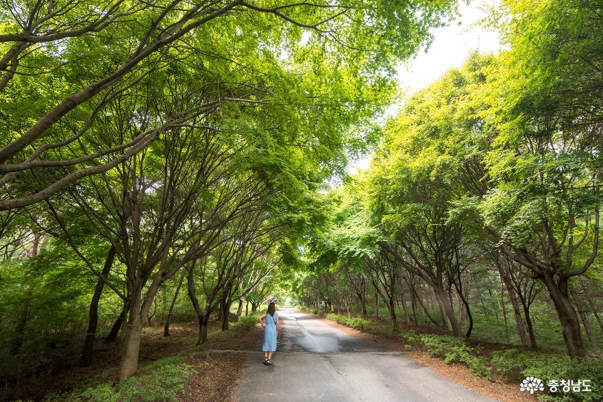 독립기념관 단풍나무숲길의 가을 소식 1