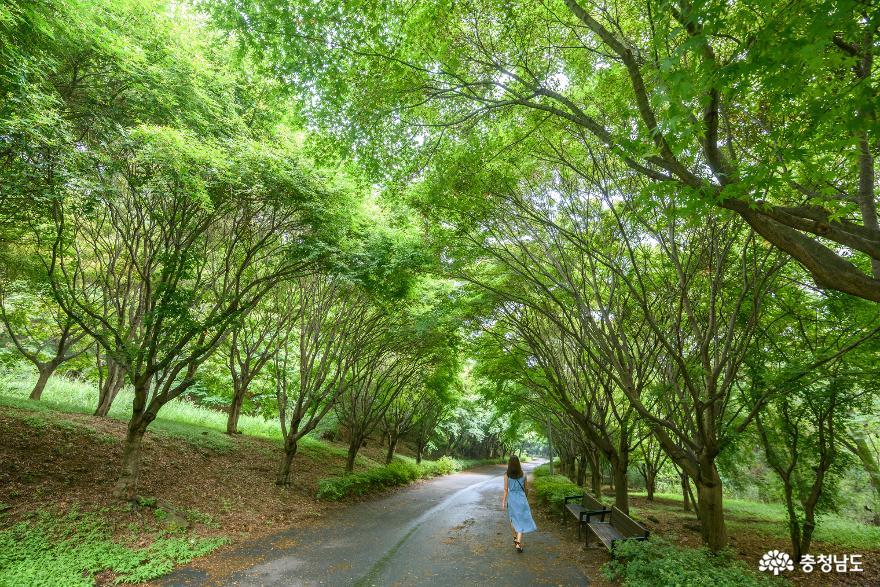 독립기념관 단풍나무숲길의 가을 소식 2