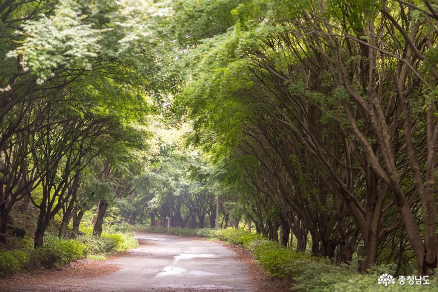 독립기념관 단풍나무숲길의 가을 소식 3