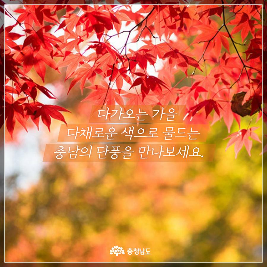 다가오는 가을 다채로운 색으로 물드는 충남의 단풍을 만나보세요.