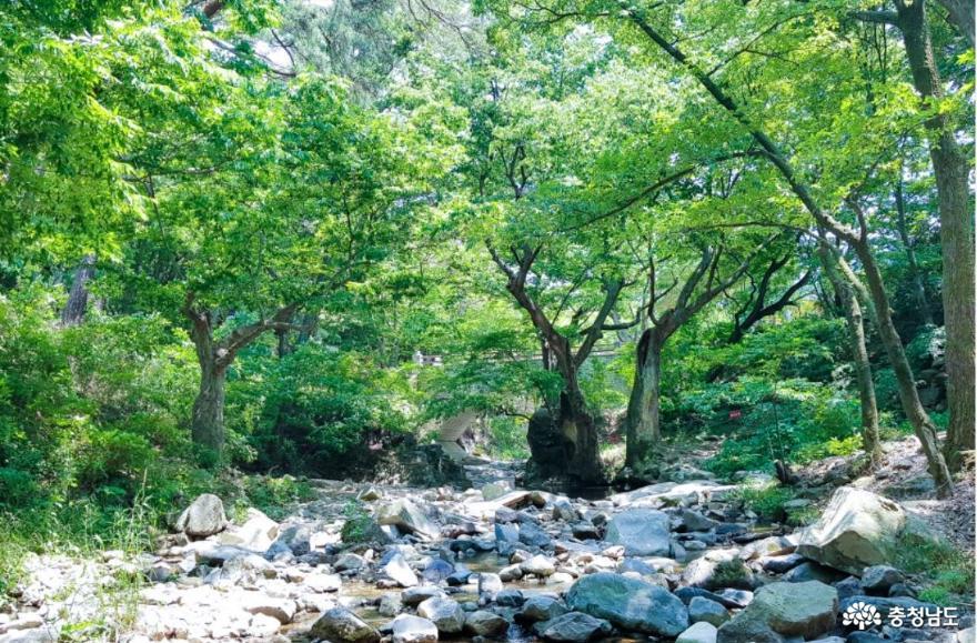 가을 낭만 가득한 아산 강당골 계곡과 봉곡사 천년의 숲길을 걸어보다! 2