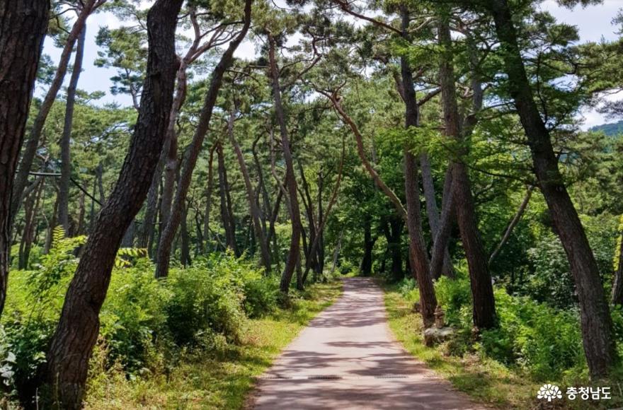 가을 낭만 가득한 아산 강당골 계곡과 봉곡사 천년의 숲길을 걸어보다! 6