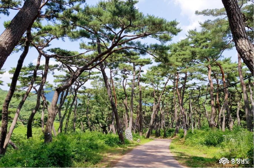 가을 낭만 가득한 아산 강당골 계곡과 봉곡사 천년의 숲길을 걸어보다!