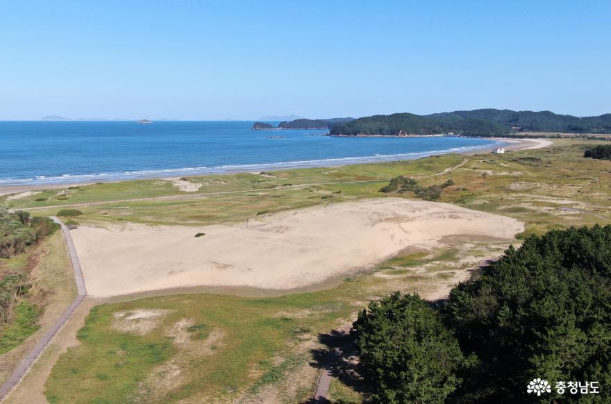 [사진보도] 태안군, 신두리 해안사구 외래식물 제거 '토착 희귀 식물 지켜요'